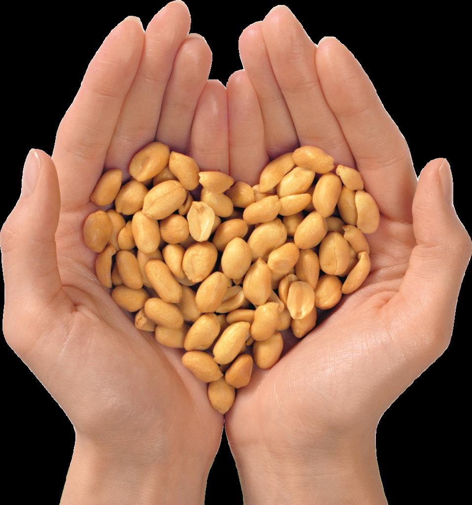 Två händer som håller en näve jordnötter format som ett hjärta